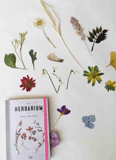 Pocket Herbarium www.dewereldvansnor.nl