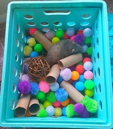 Rat Cage Diy, Pet Rat Cages, Funny Rats, Cute Rats, Baby Animals, Cute Animals, Fluffy Animals, Diy Rat Toys, Rat Cage Accessories