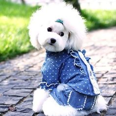Hihomedecor.com – Stylish Laced Dots Lapel Collar Cotton Dog Shirt