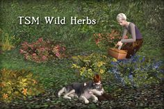 Sun and Moon's Fantasy Flavor: The Sims Medieval Wild Herbs