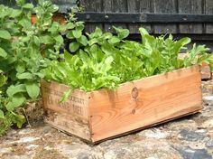 Grøntsagsmåtte - nem salatdyrkning