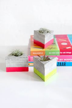 HOME  | Triangle Cement Airplant Holder