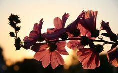 flower-646127__480