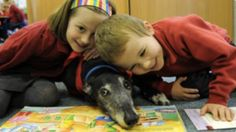 Intermountain Therapy Animal R.E.A.D. (Reading Education Assistance Program.) It's a wonderful program where Kiddos read to patient, attentive and unconditionally loving dogs.