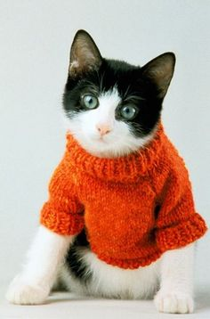 .What a lovely orange sweater!