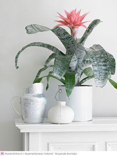 Bruisende Bromelia's - Exotische sferen in huis
