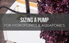 Sizing a Pump for Hydroponics or Aquaponics