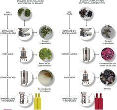 No es magia, es ciencia: la transformación de mosto en vino. - Noticias de Vinos, Enoturismo, Cata de Vino, Degustación de vino, Vino, Denominación de Origen, Bodega, Vinoteca, Sumiller, beber vino, vinos a buen precio, los mejores vinos, bodegas para visitar, vinos de españa
