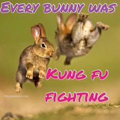 Every bunny was Kung fu fighting :)