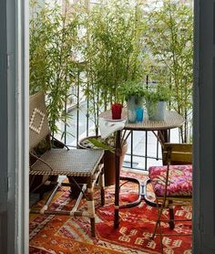 Bamboo plants as privacy screen