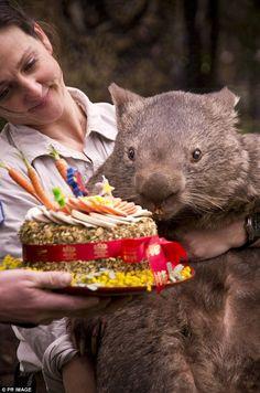 Wombat Wednesday: Happy #30, Patrick!