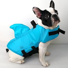 French Bulldog ❤️❤️ in a Shark Dog Safety Life Jacket French Bulldog Breed, Bulldog Breeds, Bulldog Puppies, French Bulldogs, Dog Life Vest, Dog Kennel Cover, Dog Safety, Water Safety, Swimming Outfit
