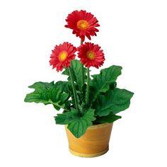 Plant+for+garden