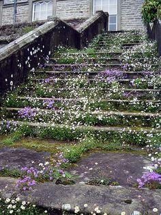 Tiny flowers growing in stairways Beautiful Gardens, Beautiful Flowers, Beautiful Places, Cumbria, Garden Paths, Garden Landscaping, Garden Steps, Landscaping Software, Landscaping Ideas