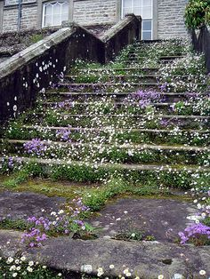 stairs, SIZERGH CASTLE AND GARDENS, Cumbria, ENGLAND