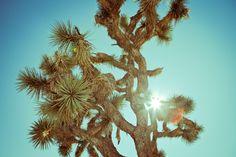 Room 8 - Joshua Tree by Helene Giansily, via Behance