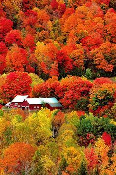"Beautiful scenery/ previous Pinner said ""Vermont during peak foliage season.Im Going To Be Going To Vermont In October To Take Beautiful Fall Scenery. Le Vermont, Beautiful World, Beautiful Places, Beautiful Scenery, Autumn Scenery, Fall Pictures, Amazing Pictures, Autumn Photos, Landscape Photos"