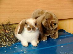 Rabbit  - 10 Small Animals That Can Make Great Pets