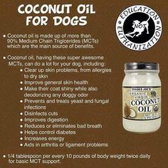 Coconut oil for dogs . . . .