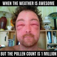 funny pollen meme about allergies Best Memes, Funny, Hilarious, Allergy Memes, Baseball Cards, Cool Stuff, Fictional Characters, Thing 1, Weather
