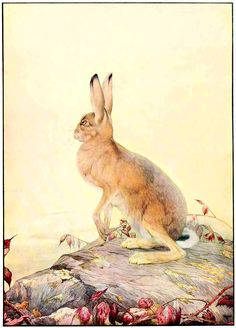 """The Hare and the Tortoise. From """"The Fables of Aesop"""" illustrated by Edward J. Detmold, 1909"""