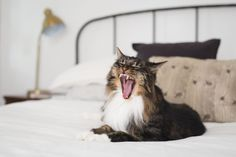 Cats who live in apartments face one very serious threat: boredom. Cat behavior problems—aggression, waking owners up in the middle of the night, obsession with food, and more—can often be traced back to a simple lack of stimulation. Though cats are often considered to be low maintenance pets, most do need some form of entertainment and activity each day.