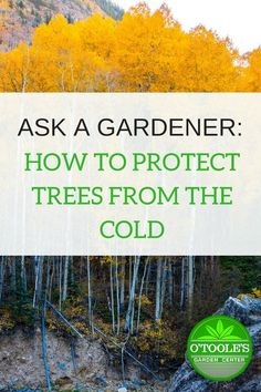 Don't let your trees get burned by the cold this fall/winter! Learn exactly how to wrap and protect your trees from the cold temperatures. Garden Pests, Garden Tools, Garden Ideas, Patio Ideas, Backyard Ideas, Cold Climate Gardening, Organic Gardening, Winter Plants, Winter Garden