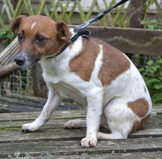 Fable at Allsorts Dog Rescue