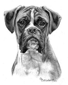 The Boxer ~ Pet Portraits by Genevieve Schlueter