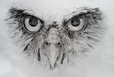 Pencil Drawings of Owls | ... . | Owl Artwork | Pinterest | Face drawings, 2d and Pencil art