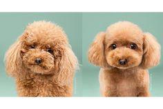Hermosos Antes Y después de #cortes de pelo de #Perritos