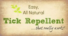 Easy Natural Tick Repellent that really works! For dogs and people. Via Primally Inspired