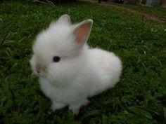 Que tal ter um coelho de estimação?