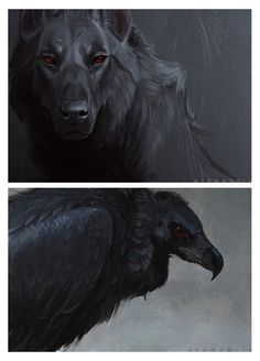 sketch1  by ~Atenebris - Black Red-Eyed Wolf and Black Red-Eyed Griffon Vulture