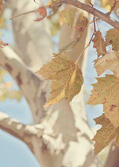 soft autumn nature home Soft Autumn, Autumn Day, Autumn Leaves, Fall Days, Autumn Nature, Autumn Harvest, Seasons Of The Year, Indian Summer, Autumn Inspiration