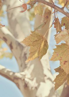 as autumn wanes it makes a little sad - Inspiration Lane