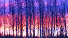 nature colorful trees Colorful Trees, Nature Photography, My Photos, Painting, Art, Art Background, Painting Art, Kunst, Nature Pictures