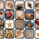 20 picture squares with a real life seashell theme. These picture square pages can be cut apart and laminated for flashcards or choices to comp. Autism Resources, Science Resources, Science Activities, Beach Activities, Science Lessons, Ocean Lesson Plans, Special Education, Early Education, Ocean Unit
