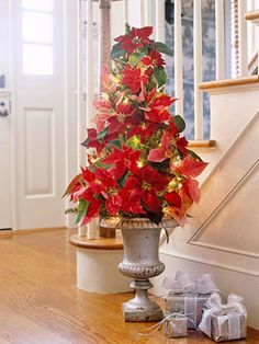 Pointsettia, I like