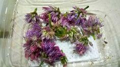 Flores de ajo
