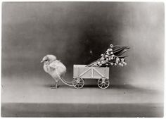 """Absolutely hysterical. """"Best Easter Wishes."""" Chick pulling flowers in small wagon. Rotograph Company of New York, 1908."""