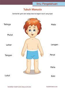 lembar belajar anak SD/TK, mengenal dan membaca nama anggota bagian badan, tubuh manusia
