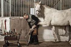 Man die paard verzorgd met gebroken poot