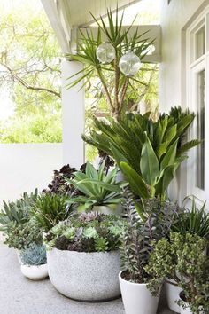 High impact potted plants