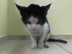 NYC Senior TO BE DESTROYED 2014/04/30 My name is SAKI. My Animal ID # is A0997798.female black & white.a 9 YEARS old.STRAY https://www.facebook.com/nycurgentcats/photos/pb.220724831278845.-2207520000.1398815094./782533685097954/?type=3&src=https://z-1-scontent-b.xx.fbcdn.net/hphotos-prn1/t1.0-9/10176101_782533685097954_5775010564280629982_n.jpg&size=640,480&fbid=782533685097954#!/nycurgentcats/photos/a.782533618431294.1073742287.220724831278845/782533708431285/?type=3&theater