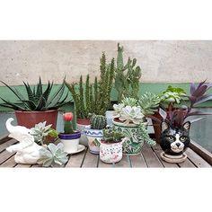 Colección de cactus y suculentas de Charuca. En Barcelona.