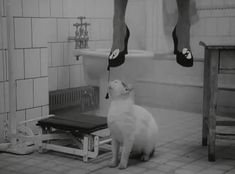 http://blogfiles.wfmu.org/KF/2011/07/27/suicide_cat.gif