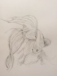 30 best les dessins tableaux de laure images on pinterest - Croquis poisson ...