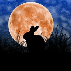 Rabbit Under The Harvest Moon by Elizabeth Alexander - Hase Hare Pictures, Rabbit Pictures, Moon Pictures, Rabbit Silhouette, Moon Silhouette, Harvest Moon, Rabbit Art, Jade Rabbit, Rabbit Drawing