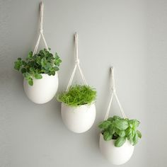 Minimalist's Garden - perfect for growing herbs in-doors where my cat can't reach them!